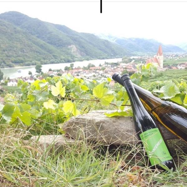 Wein-Wanderung